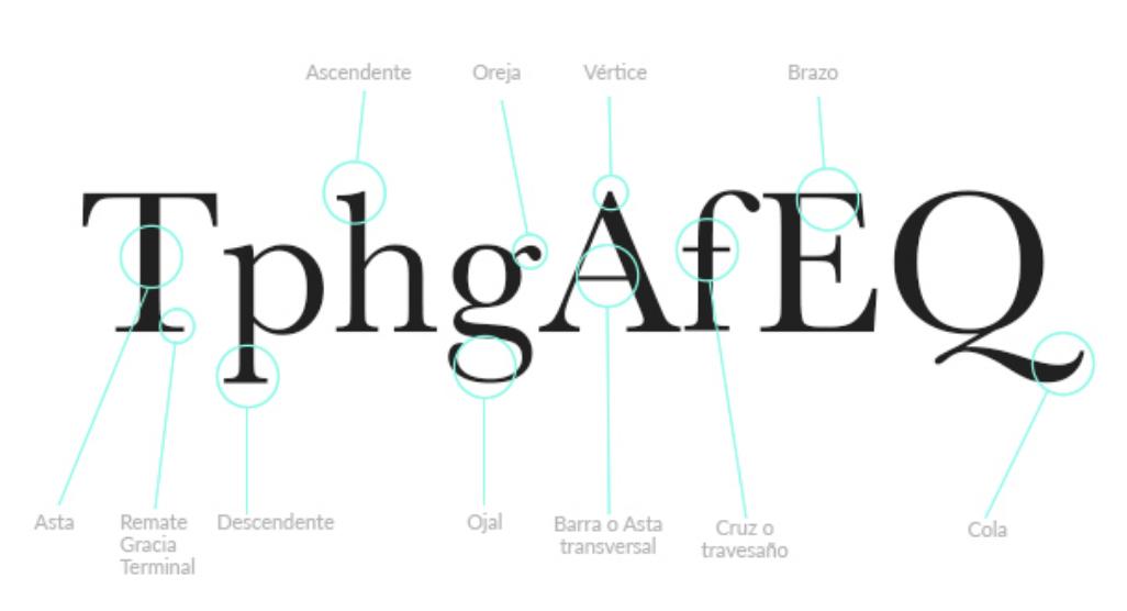 anatomia palabras